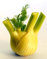 Salaattifenkoli